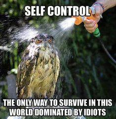 ain't that the darn truth..I feel for ya owl, I so feel for ya