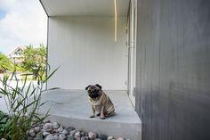 Singelfamily house  Built: 2015 Architect: Marita Hamre  Cladding: Accoya Windows: Ideal Combi Futura+ Architect House, House Built, Cladding, Windows, Building, Buildings, Construction, Ramen, Window