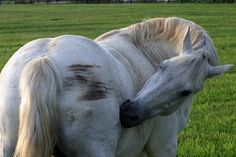 Equine Skin Issues: Scratching the Surface