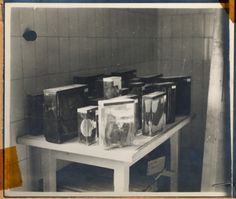 "View of preserved human organs removed from prisoners during medical experiments conducted in Buchenwald concentration camp.  The lender's handwritten caption reads, ""This is part of the laboratory, where Ilse Koch tattoed human skins were cured for lamp shades."""