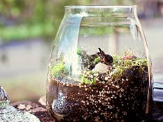 My friend just gave me one of these, mine is mostly moss and has frogs instead of hippos. Great easy gift idea.