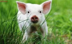 Após pressão, laboratório proíbe uso de animais em treinamento de vendas