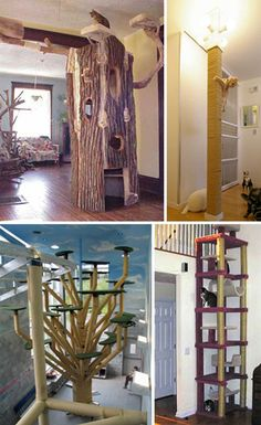 These are great cat scratching posts! I absolutely love the tree stump!