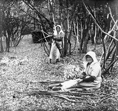 Nordrhein-Westfalen. Siegerländer Haubergswirtschaft: Bäuerinnen beim Schälen der Eichenäste (Lohschälen). ca. 1920 #Siegerland