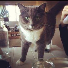 Our cat Jolene! #cat #kitty #beautiful