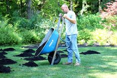 man dumping small pile of compost on green grass using blue wheelbarrow Lawn Care Schedule, Lawn Care Tips, Lawn Soil, Weeds In Lawn, Green Lawn, Green Grass, Lawn And Garden, Garden Edging, Garden Trees