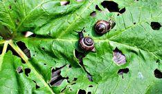 Lehtokotiloista eroon oikeilla toimilla Fungi, Gardening Tips, Flora, Animals, Zero Waste, Outdoors, Animales, Mushrooms, Animaux
