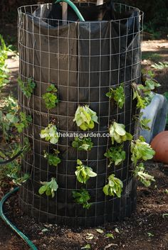 How To Make A Vertical Lettuce Garden - LivingGreenAndFrugally.com/ and you could grow potatoes in the center