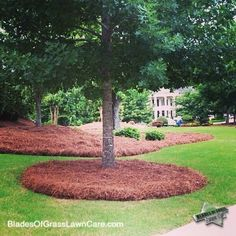 Pine needles decompose and add organic material to the soil. They also aerate th… - Modern Pine Straw Landscaping, Landscaping Around Trees, Hillside Landscaping, Outdoor Landscaping, Front Yard Landscaping, Landscaping Ideas, Lawn And Landscape, Landscape Design, Garden Design