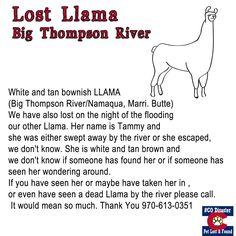 Lost Llama's Big Thompson River Colorado Flood Victims please share and pin
