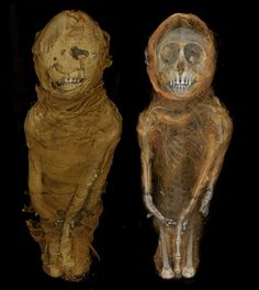 X-ray micro-CT scan of a mummified Egyptian monkey. The Natural History Museum holds a number of Egyptian animal mummies, the majority of which were religious offerings. This monkey's neck has been broken, an indication that its purpose was to be sacrificed as a temple offering.