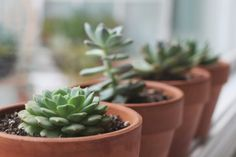 tips-para-cultivar-suculentas-saludables-02