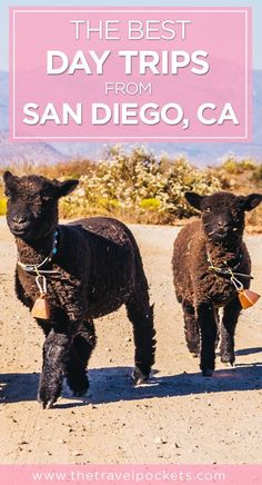 Best day trips from San Diego, California, USA #SanDiego #California #californiatravel