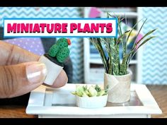 DIY Miniature Plants | EASY DOLLHOUSE DIY - YouTube