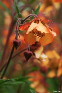 hardsadness:hide Sun House, Enchanted Garden, Pretty Flowers, Dandelion, Nature Photography, Beautiful Pictures, Design Inspiration, Fantasy, Seasons