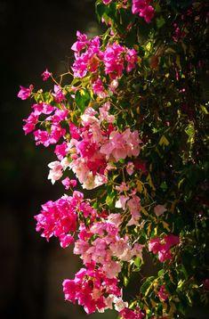 Wallpaper Nature Flowers, Beautiful Landscape Wallpaper, Flower Background Wallpaper, Beautiful Flowers Wallpapers, Flower Phone Wallpaper, Scenery Wallpaper, Pretty Wallpapers, Flower Backgrounds, Flowers Nature