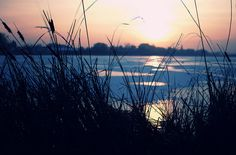reeds  by ewitsoe    Swarzedz, Poland