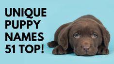 🐶 Unique Puppy Names 51 BEST 🐾 TOP 🐾 CUTE 🐾 Ideas | Names Corgi Dog Breed, Cute Corgi Puppy, Beagle, Unique Female Dog Names, Best Dog Names, Cute Girl Puppy Names, Cute Names, Blue Merle, Best Apartment Dogs