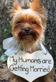 Sin duda, las mascotas dan un toque de humor al anuncio.