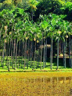 Floresta Estadual Edmundo Navarro de Andrade - RIO CLARO - SP - BRASIL.