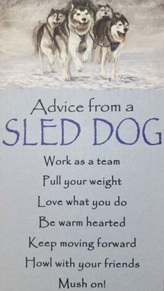 Advice from a Sled Dog
