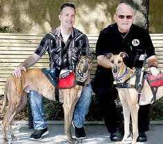 Karl and Hero and Frank and Buff. Two service dogs from Awesome Greyhound Adoptions from their Hounds and Heroes program, working with veterans.