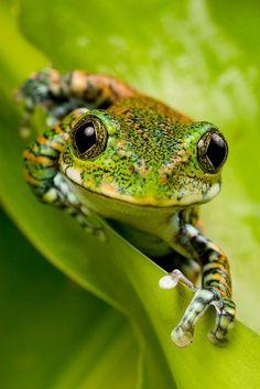 Cute Green Frog - Furkl.Com