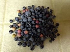 Assorted blueberries 2014