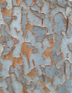 Patterns in nature: tree bark Patterns In Nature, Textures Patterns, Print Patterns, Nature Artwork, Nature Tree, Trendy Tree, No Photoshop, Tree Bark, Texture Art