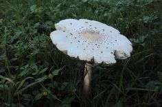 Fairy umbrella :) Photo by Tamela Murley