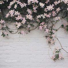 Viney florals