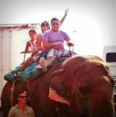 TODOS FELICES -menos el elefante-
