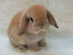 Just a cute little furry bunny!