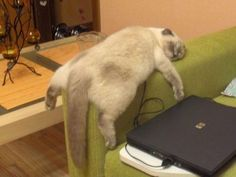 """""""Why can't I just sleep right now and think about life later?""""   22 Cats Who Have No Idea What They're Doing With Their Lives"""