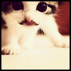 Jeeves. Place the glass on the table. I want to knock it off.  *moustache kitteh
