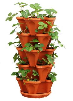 growing strawberries in containers Strawberry Vertical Gardening Hydroponics Tower Pots Growing System Kits In . Herb Garden Planter, Vegetable Planters, Garden Pots, Garden Ideas, Herbs Garden, Garden Projects, Vegetable Garden, Bulb Planter Tool, Planter Pots