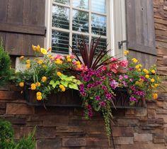 Summer Surprise- Morning sun window box containing lantana, daylilies, begonias, potato vine, creeping jenny, superbells, and tall purple grass