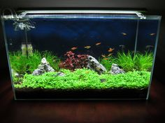 Follow me and watch my ADA 60P be transformed into a blissful aquascape of aquatic plants and fauna. The journey begins here...