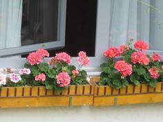 Flores na janela. Floral Wreath, Windows, Wreaths, Plants, Home Decor, Photos, Flower Crowns, Door Wreaths, Window