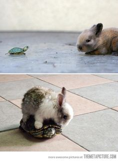 bucket list: get a turtle and a bunny and let them play together :)