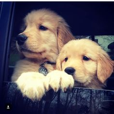 Loving the car ride !