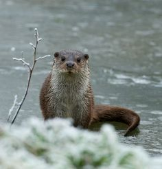 An otter would be such a cute animal to embroider ! I love their almost confused look :)
