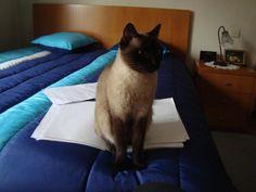My study partner - Imgur