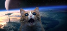space cat wall paper - Google Search