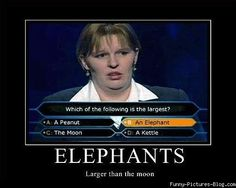 Elephants - larger than the moon.