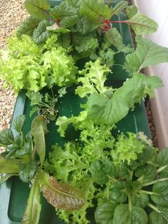 Kratky's Non-circulating Hydroponics: 10 Steps (with Pictures) Hydroponic Farming, Hydroponic Growing, Hydroponics System, Growing Plants, Aquaponics Garden, Water Plants, Cool Plants, Inside Plants