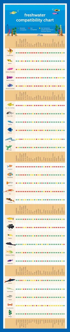 cool Freshwater Fish Compatibility Chart by http://www.dezdemon-exoticfish.space/freshwater-fish/freshwater-fish-compatibility-chart/