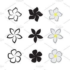 Graphics Vector of tropical flowers frangipani (plumeria) on white - Files Vector - by Frangipani Tattoo, Plumeria Flowers, Tropical Flower Tattoos, Tropical Flowers, Tatouage Plumeria, Nail Art Fleur, Stencil Printing, Creative Sketches, Pencil Illustration