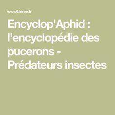 Encyclop'Aphid : l'encyclopédie des pucerons - Prédateurs insectes