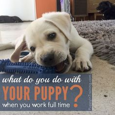 One of the big questions you should answer before getting a puppy is what do you do with your puppy when you work full time?